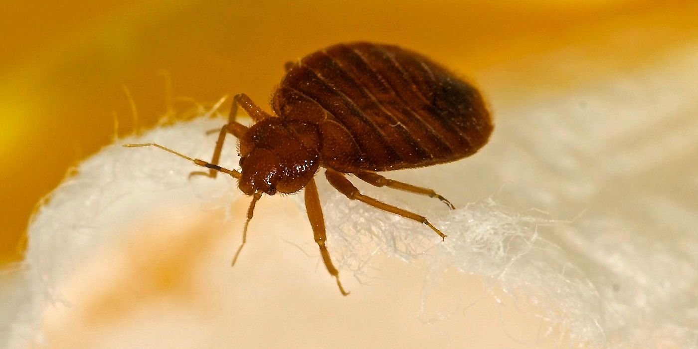 Bed Bug Myths - Pest Off Pest Control Services - Sherman Texas