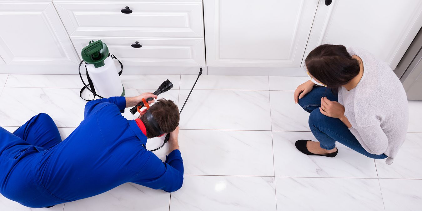 Household Pest Control - Pest Off - Sherman Texas Pest Control