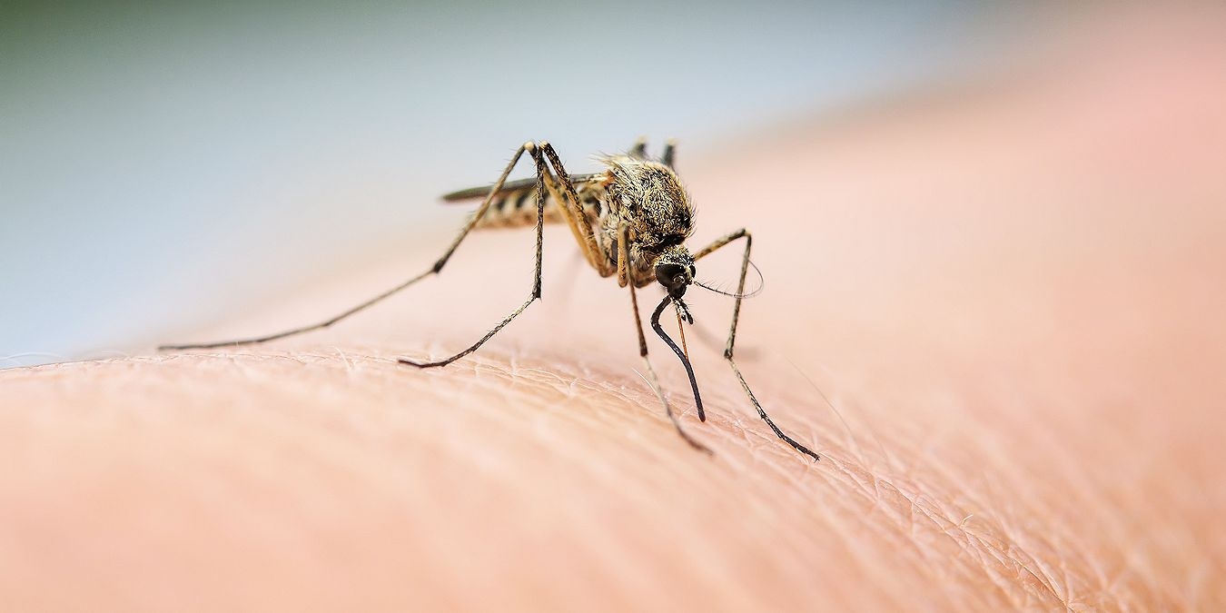 Affordable Mosquito Control Services in North Texas - Pest
